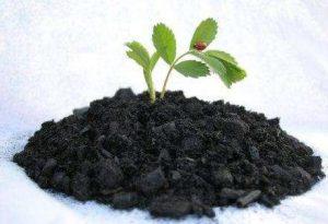Xin Giấy phép sản xuất phân bón hữu cơ và phân bón khác