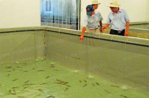 Thủ tục nhập khẩu giống thủy sản