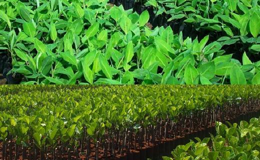 Tư vấn thủ tục xin Giấy phép nhập khẩu giống cây trồng nông nghiệp