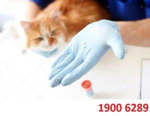 Thủ tục xin cấp giấy chứng nhận lưu hành thuốc thú y