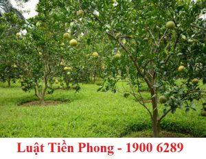 Điều kiện để mua đất trồng cây hàng năm