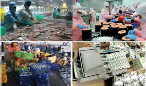Một số điểm mới về kiểm tra, chứng nhận ATTP thủy sản nhập khẩu