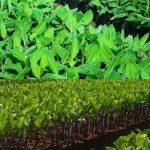 Tư vấn xin Giấy phép nhập khẩu giống cây trồng nông nghiệp