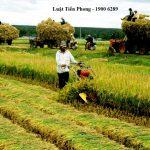 Quy định mới về các trường hợp được miễn, giảm thuế sử dụng đất nông nghiệp