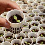 Tư vấn thủ tục nhập khẩu giống cây trồng