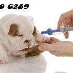 Tư vấn gia hạn và cấp lại chứng chỉ hành nghề trong lĩnh vực thú y