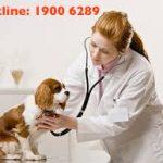 Tư vấn quy định mới nhất về cấp chứng chỉ hành nghề thú y