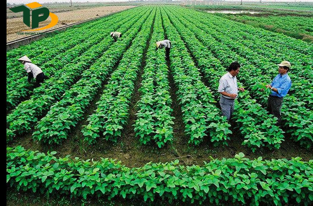 Mua đất nông nghiệp cần lưu ý về diện tích bị giới hạn
