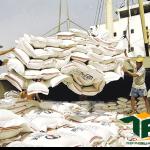 Những trường hợp bị thu hồi giấy phép xuất khẩu gạo