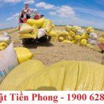 Những việc bắt buộc phải làm sau khi được cấp giấy phép xuất khẩu gạo