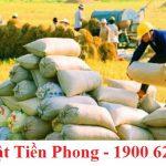 Thủ tục xin cấp lại giấy chứng nhận xuất khẩu gạo do thay đổi thông tin, bị mất