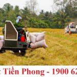 Cấp giấy chứng nhận đủ điều kiện xuất khẩu gạo